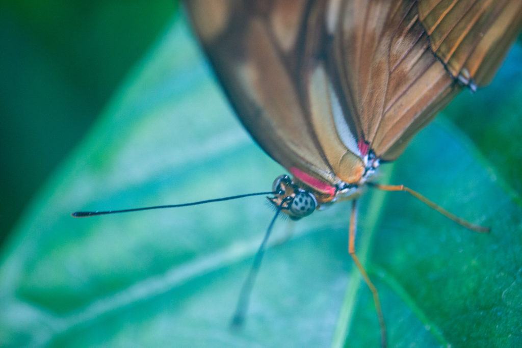 closeup profile of a butterfly's antennae