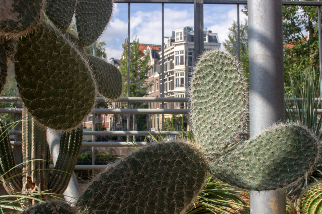 cacti leaves with the view of one of Amsterdam's canals behind